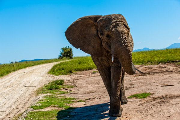 Knysna Elephant Park.