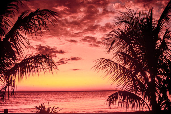 Coucher Du Soleil Sur Les Palmiers.